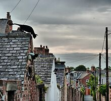The Cat on The Roof . by Lilian Marshall