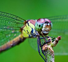 'Up Close & Personal - Dragonfly' by Anna Billingham