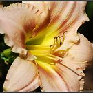 Lily #12 by Mattie Bryant