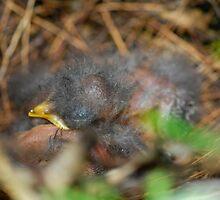 Sleeping Babies by Linda Houghton
