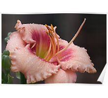 Rainy Day Lily Poster