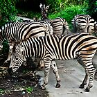 Zebra Crossing by Keith Irving