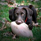 Let's Play Football!!! by Lori Deiter
