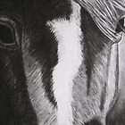Thoroughbred in Charcoal by RCTrotman