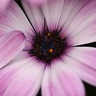 Purple Petals by RCTrotman