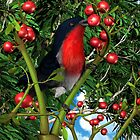 The Mistletoebird by Ken Gilliland