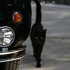 black cat by Gino Lalic