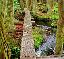 Over the Brook  the Red Cedar trail     by Rick  Todaro
