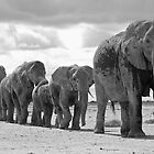 Elephant matriarch leading the family by Graeme Shannon