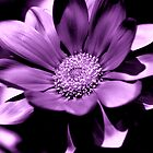 Purple Flower by Kerensa Davies
