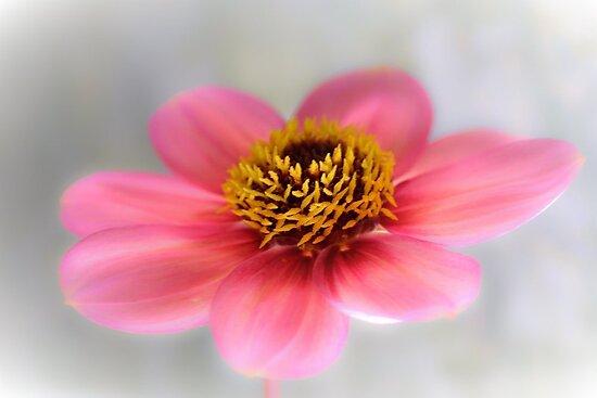 Floral Kiss by missmoneypenny