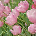 Baby Pink Tulips by Jill Vadala