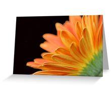 Orange Gerbera Daisy Greeting Card