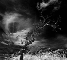 The Lightening Tree by dotcomjohnny