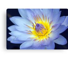 Feeling Blue - macro waterlilly Canvas Print