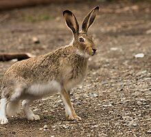 crazy rabbit by JamesA1