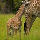 Close to mom. by Explorations Africa Dan MacKenzie