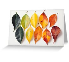 Colorful life in the nature Greeting Card