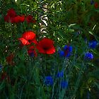 Secret Garden with Red and Blue   by miadefleur