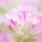 Pink softness by aMOONy