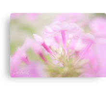 Pink softness Canvas Print