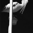 Pelican - Bairnsdale by Ken Jones