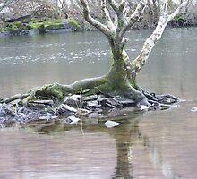 Lagoons in Noth Wales by dooberiesinwale
