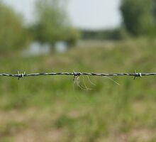 Barbed Wire by Niek Broens