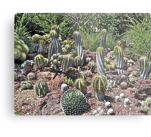 Untitled, California Metal Print