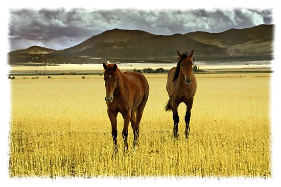 Two yearlings 1 by heidiannemorris