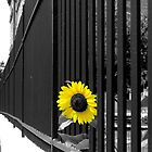 Sunflower Escape by L.D. Bonner