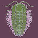 Triarthus eatoni by Sean Craven