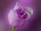 Mystical Purple by Sandy Keeton