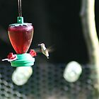 Hummingbird #1 by AlGrover