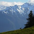 Hurricane Ridge View by Olga Zvereva