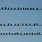 4 and 20 Blackbirds by lanebrain photography