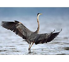 Blue On Blue Wingspan / Great Blue Heron Photographic Print