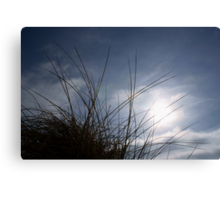 Grasses on the Beach at Croyde Canvas Print