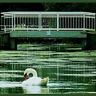 swan in gracht by LisaBeth
