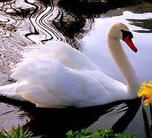 Be a friend of Daffodil  by Brian Bo Mei