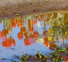 Reflections In A Puddle by Queen