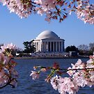 Cherry Blossom: Jefferson Memorial by Philip  Brown