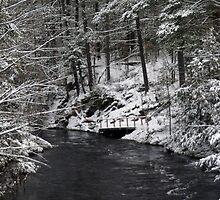 Winter in Muskoka by Wayne Wood
