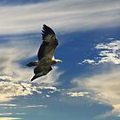 Catching the Thermals by byronbackyard