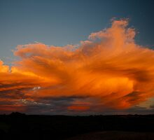 Red shower - Sunset Northern Rivers by australiansky