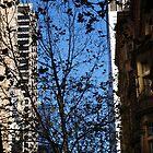 blue view... by byzantinehalo