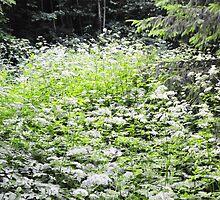 White forest flowers of Latvija 1 by Rita Analise Kaulina