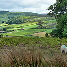 Across the Dale by capney