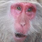 Wise old snow monkey, Japan by JulieKyte