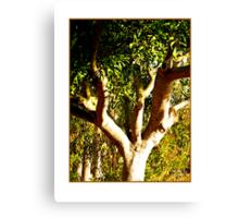 Tree DCCLXXVI Canvas Print